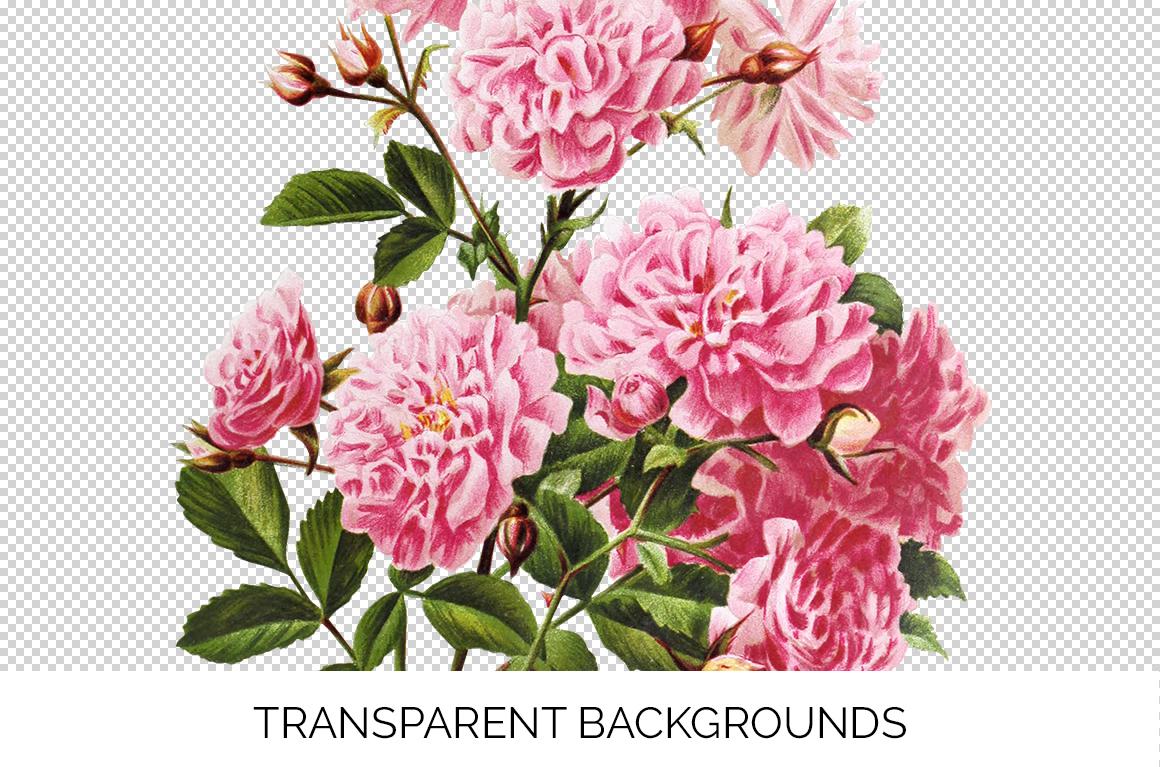 Rose Vintage Pink Rose Lady Flowers