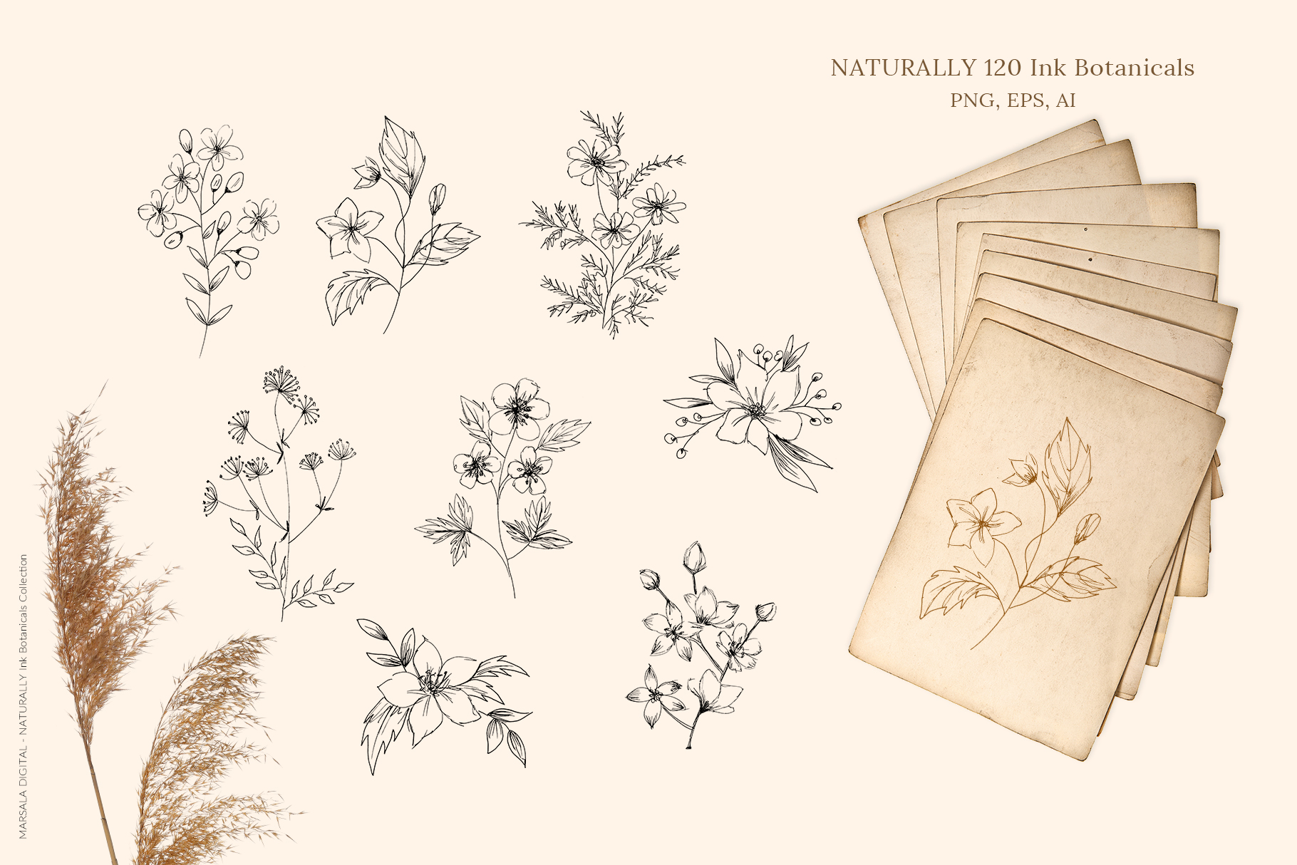 Ink Botanicals Vintage Wildflowers Ink Botanicals Vintage example image 2