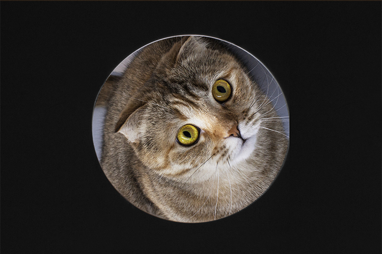 Cat in a circle example image 1
