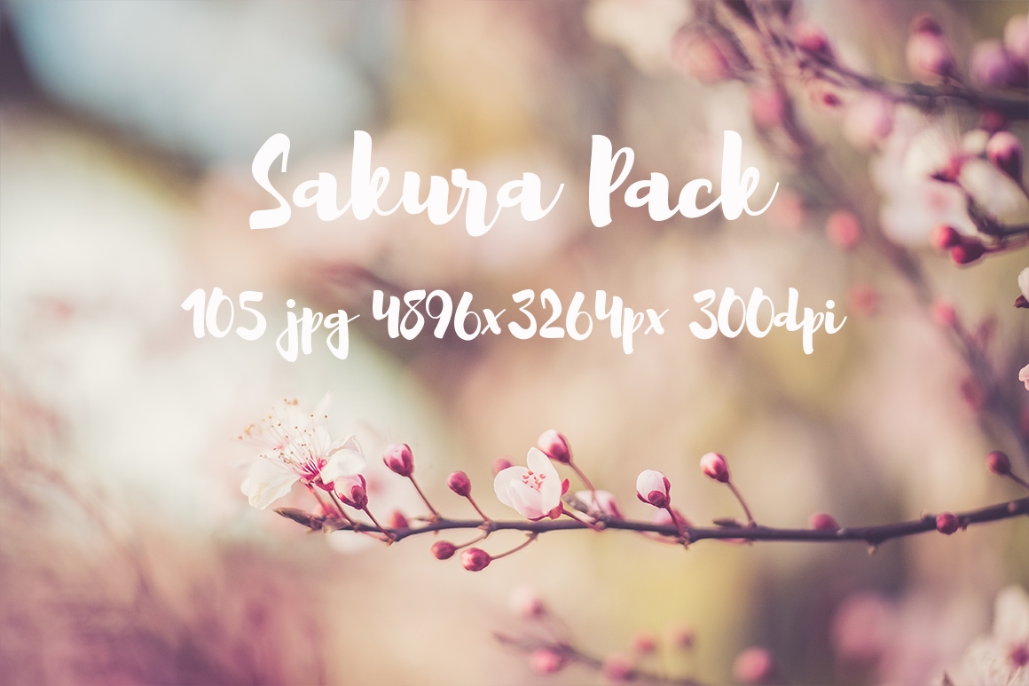 sakura photo pack example image 12
