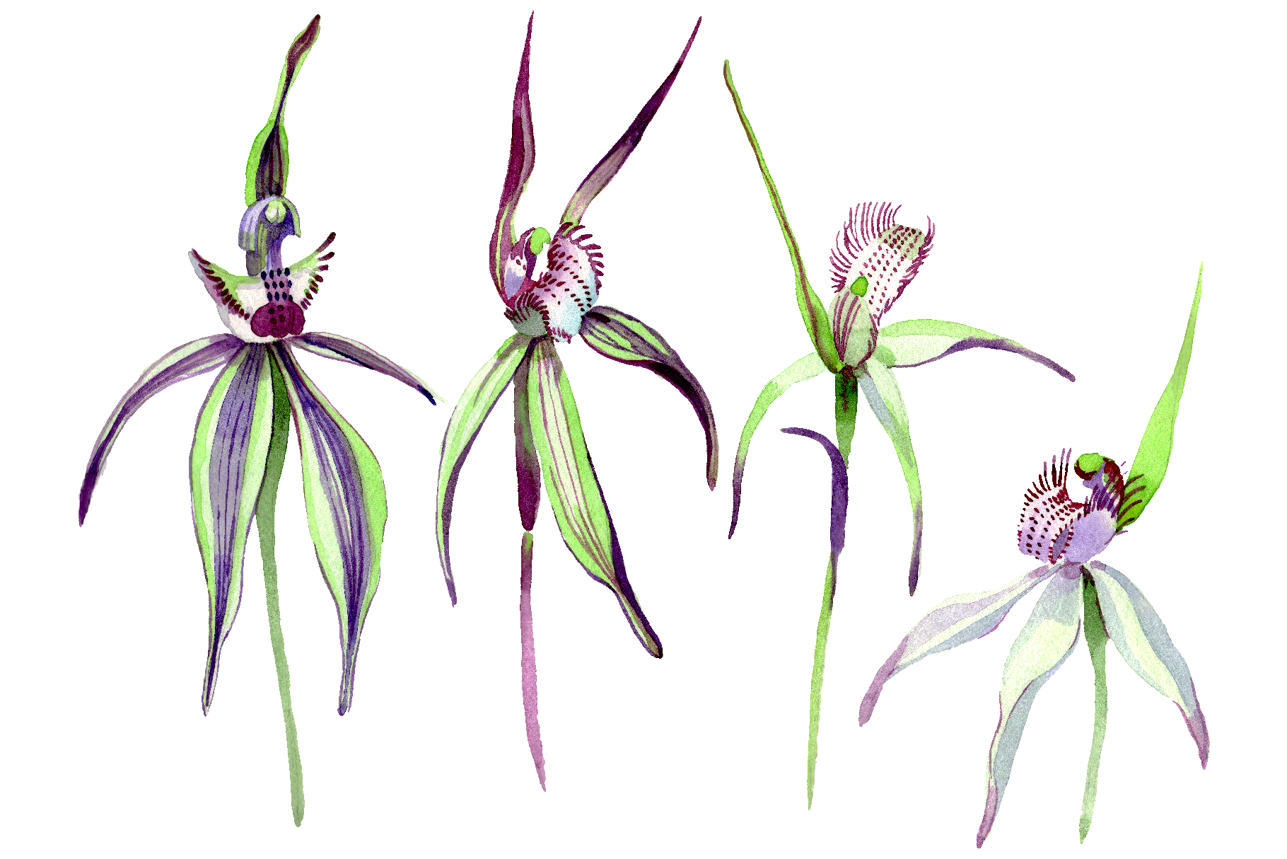 Wild orchid Watercolor png example image 1