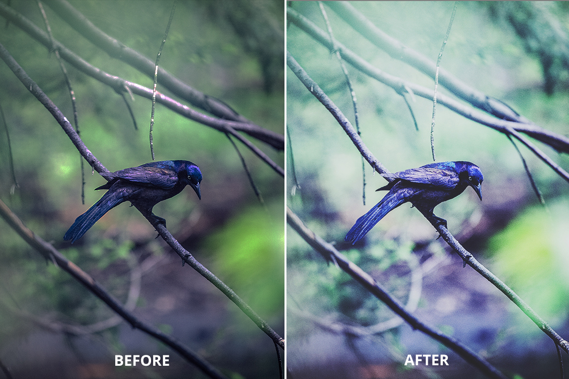 Hello October Photoshop Action example image 7