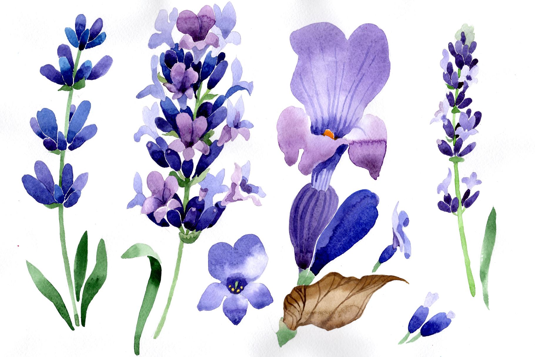 Purple Lavender Flowers Watercolor Png Macro