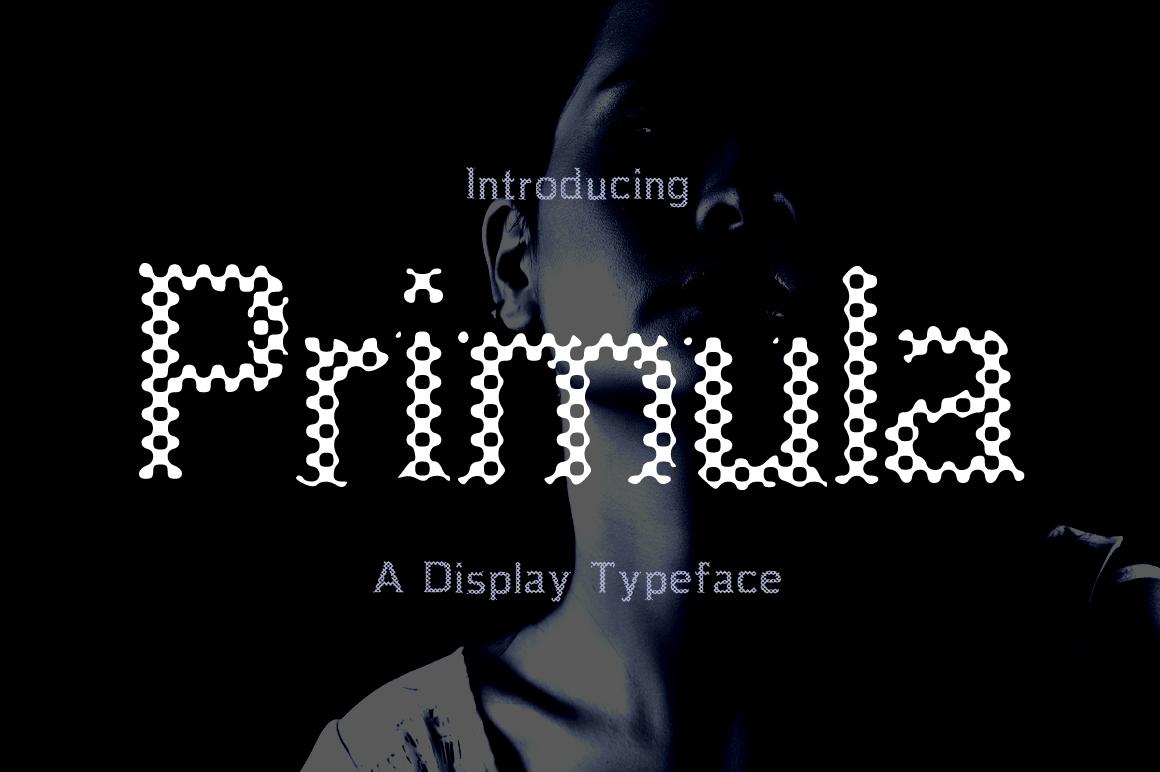 Primula  example image 1