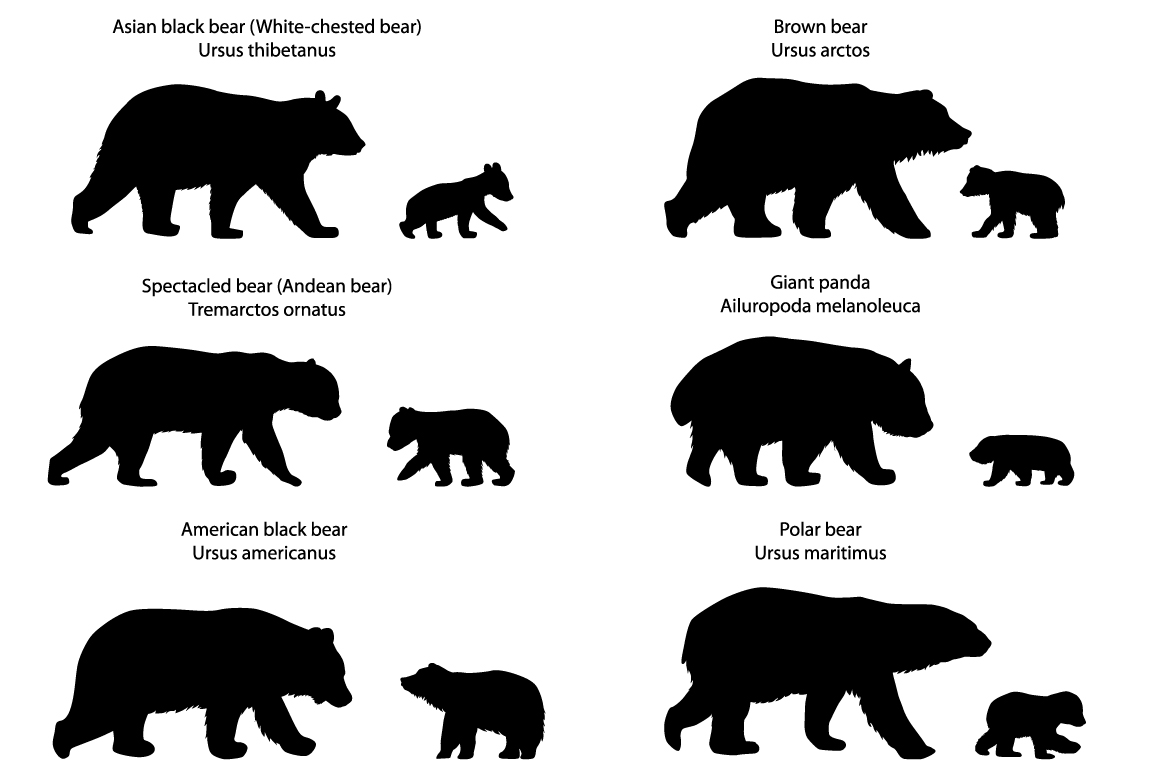 Silhouettes of bears and bear-cubs example image 1