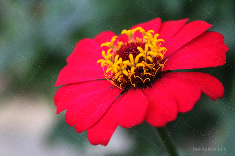 Vibrant Flowers example image 5