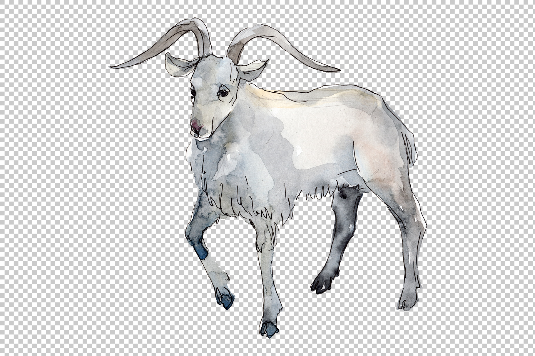 Farm animals Goat Watercolor png example image 4