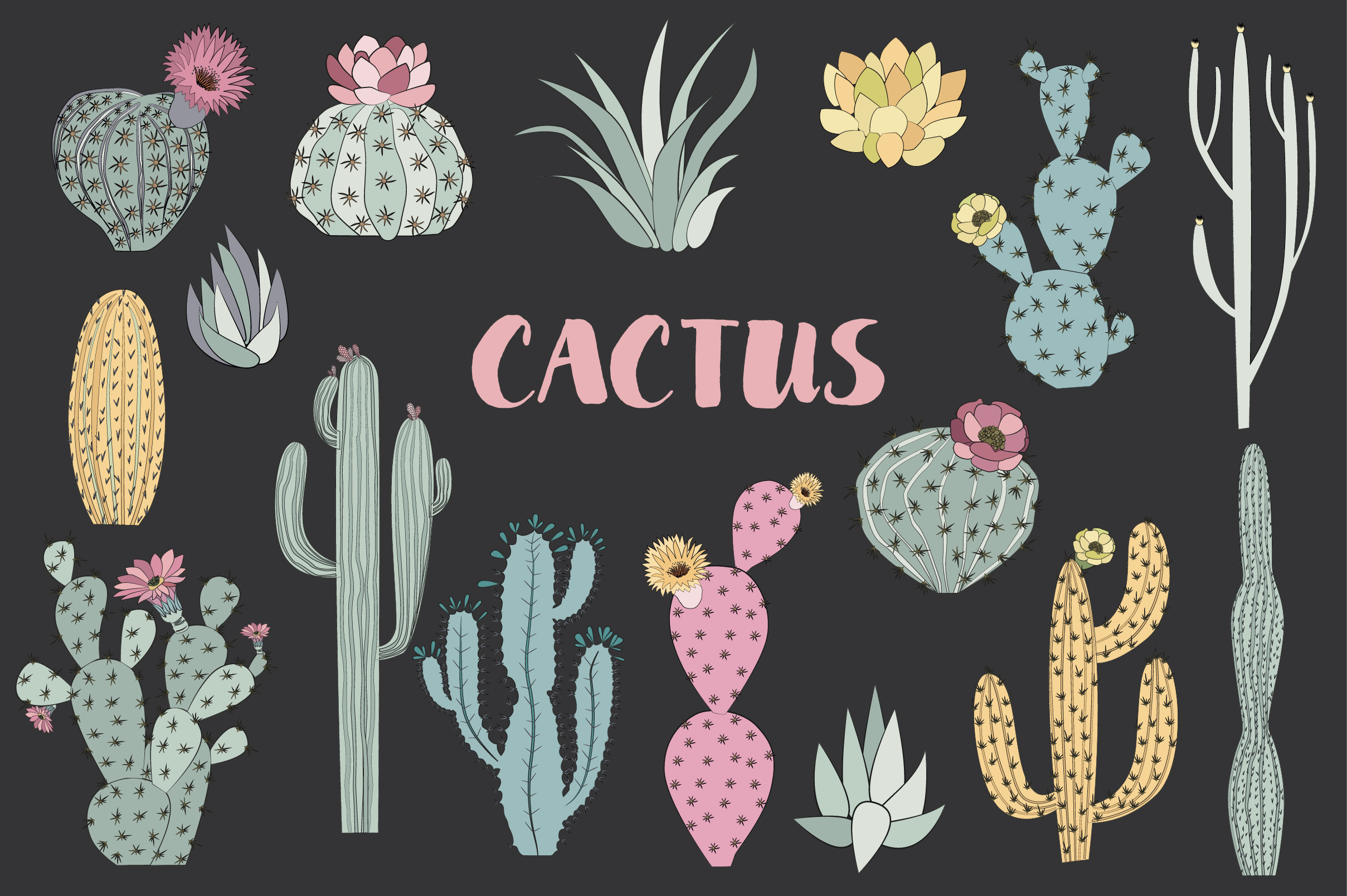 Wild & Free cactus collection example image 3