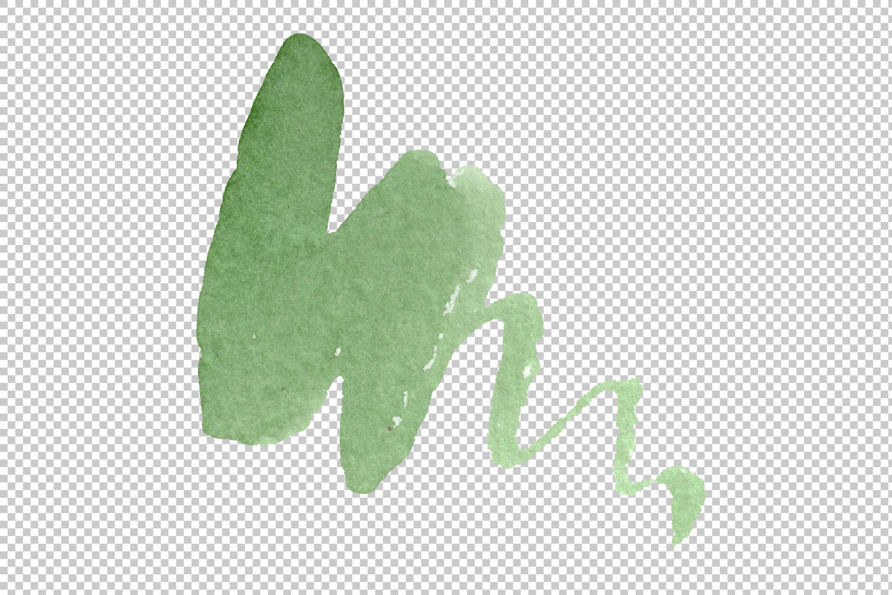 Albuca canadensis Watercolor png example image 17
