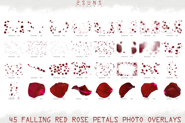 Falling Rose Petals Photo Overlays , Rose Petals, Red Rose example image 7