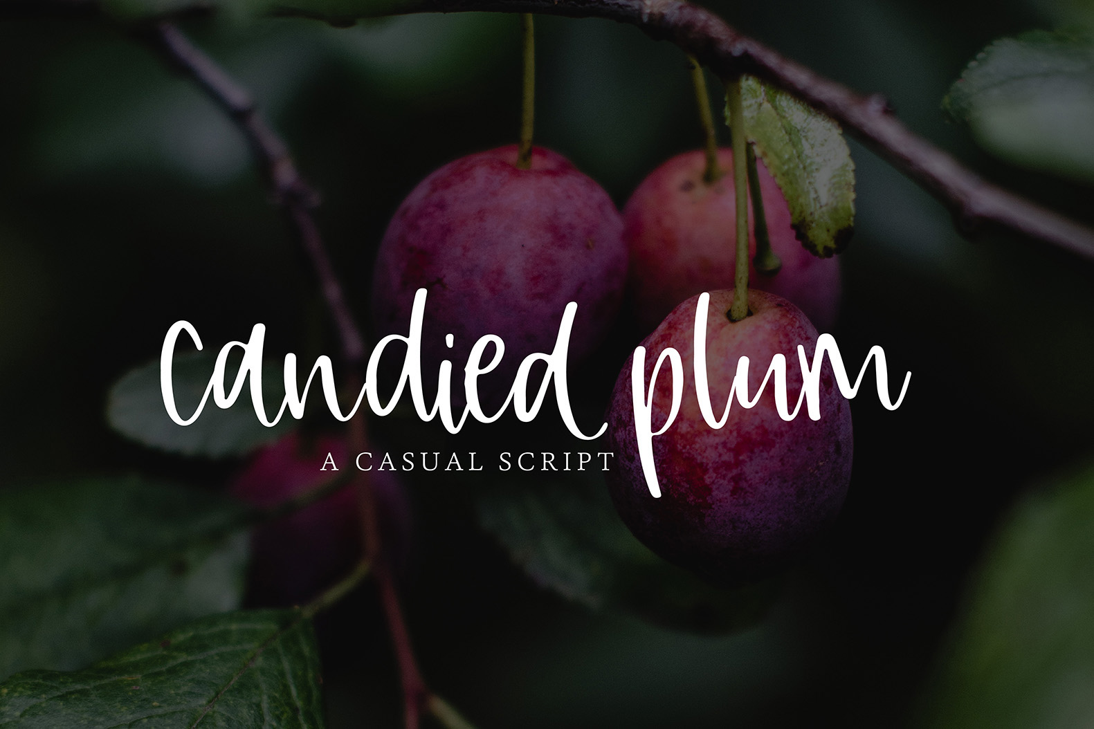 Candied Plum example image 1
