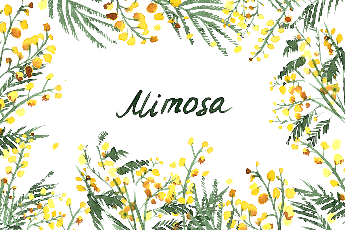 Mimosa flowers watercolor clipart hand drawn mimosa yellow wedding mimosa flowers watercolor clipart hand drawn mimosa yellow wedding flowers logo blog mightylinksfo