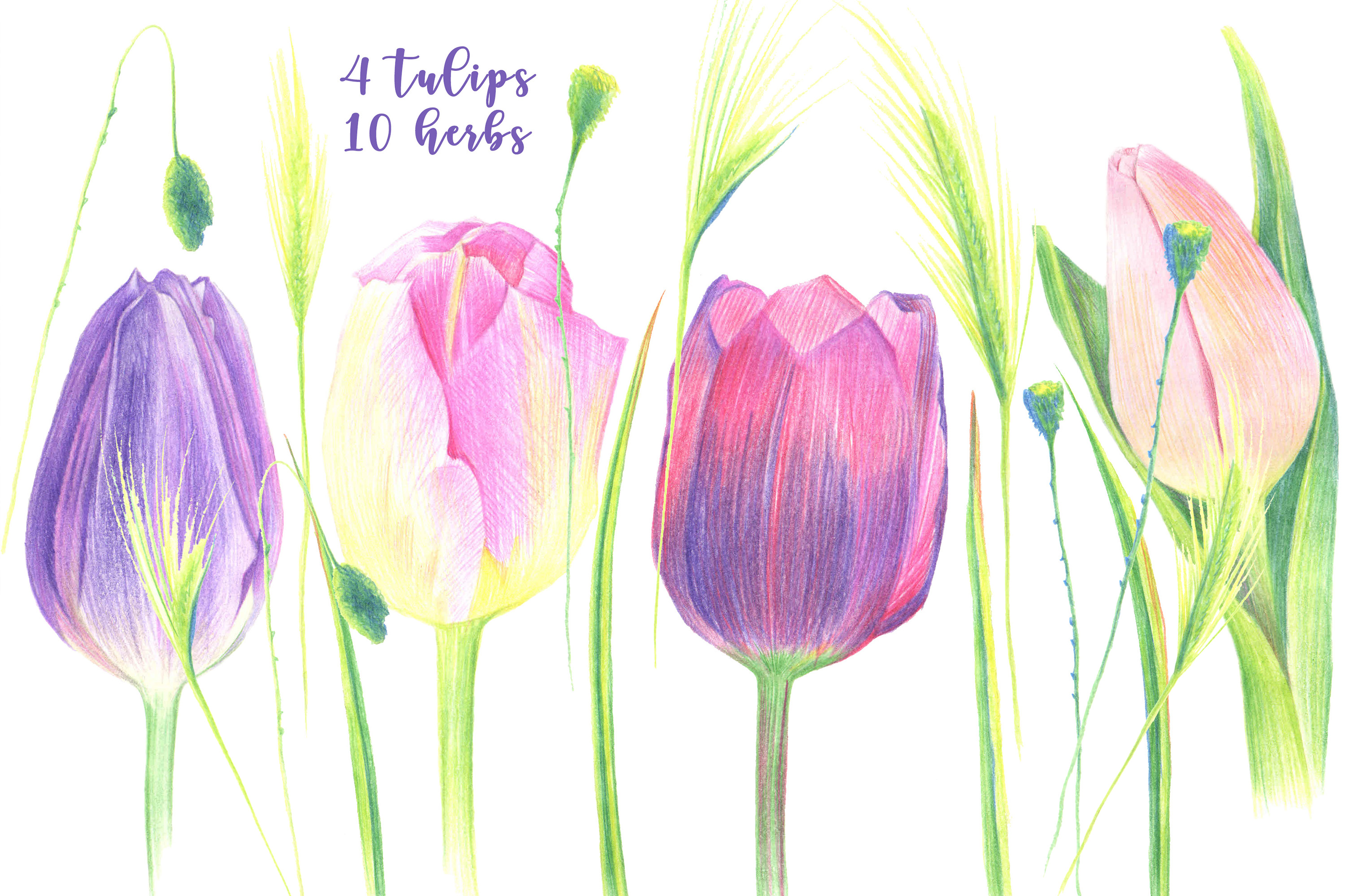 Four tulips example image 6
