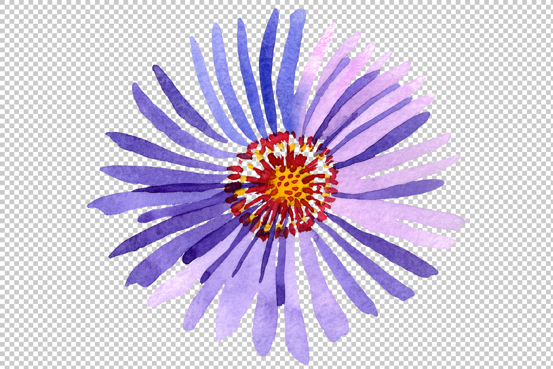 Asters Watercolor png example image 9