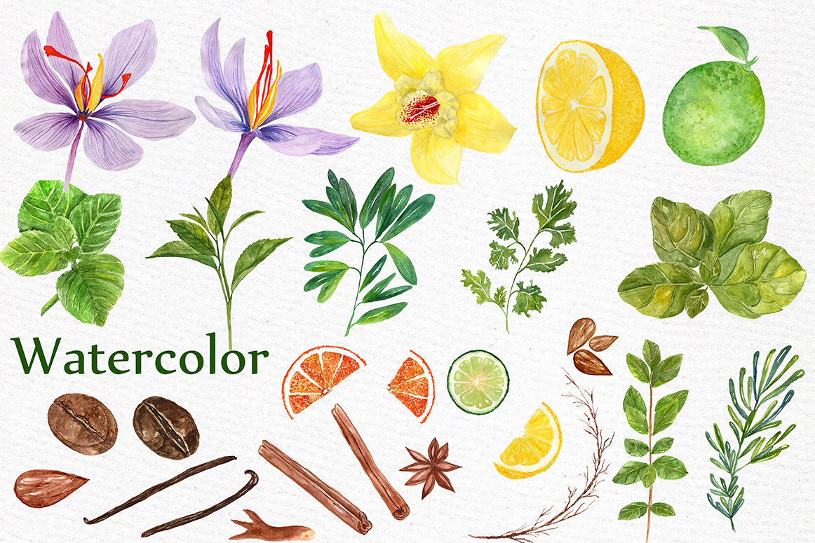 Watercolor Herbs and spices clipart example image 2
