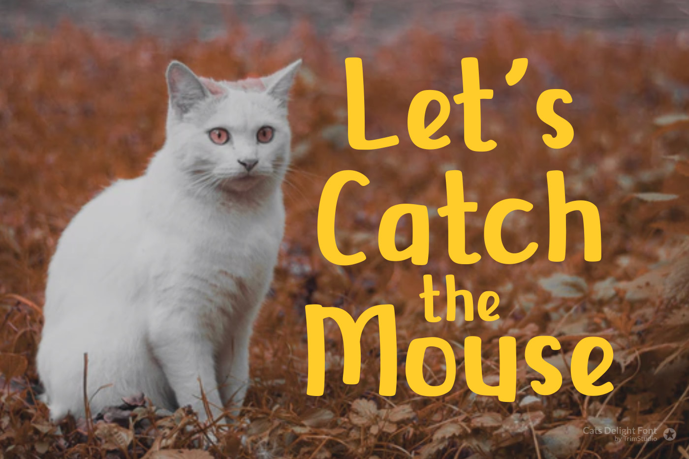 Cats Delight - Cat Display Font example image 2
