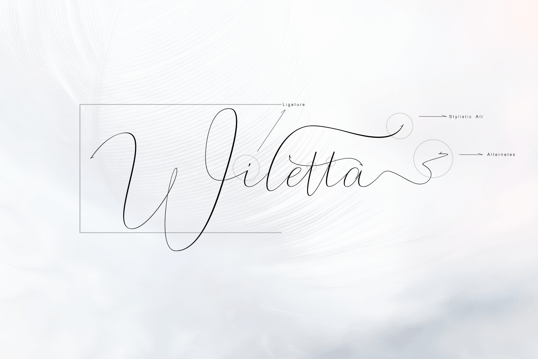 Whitening Font family example image 4