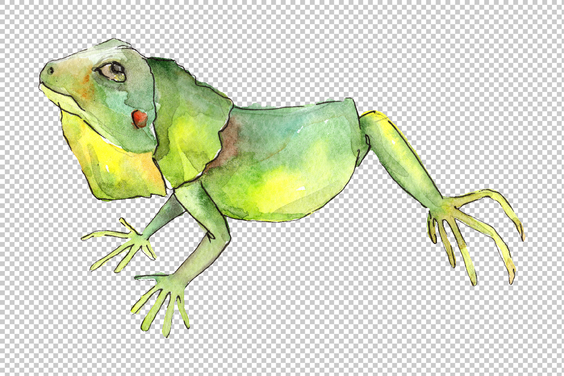 Iguana-1 Watercolor png example image 4