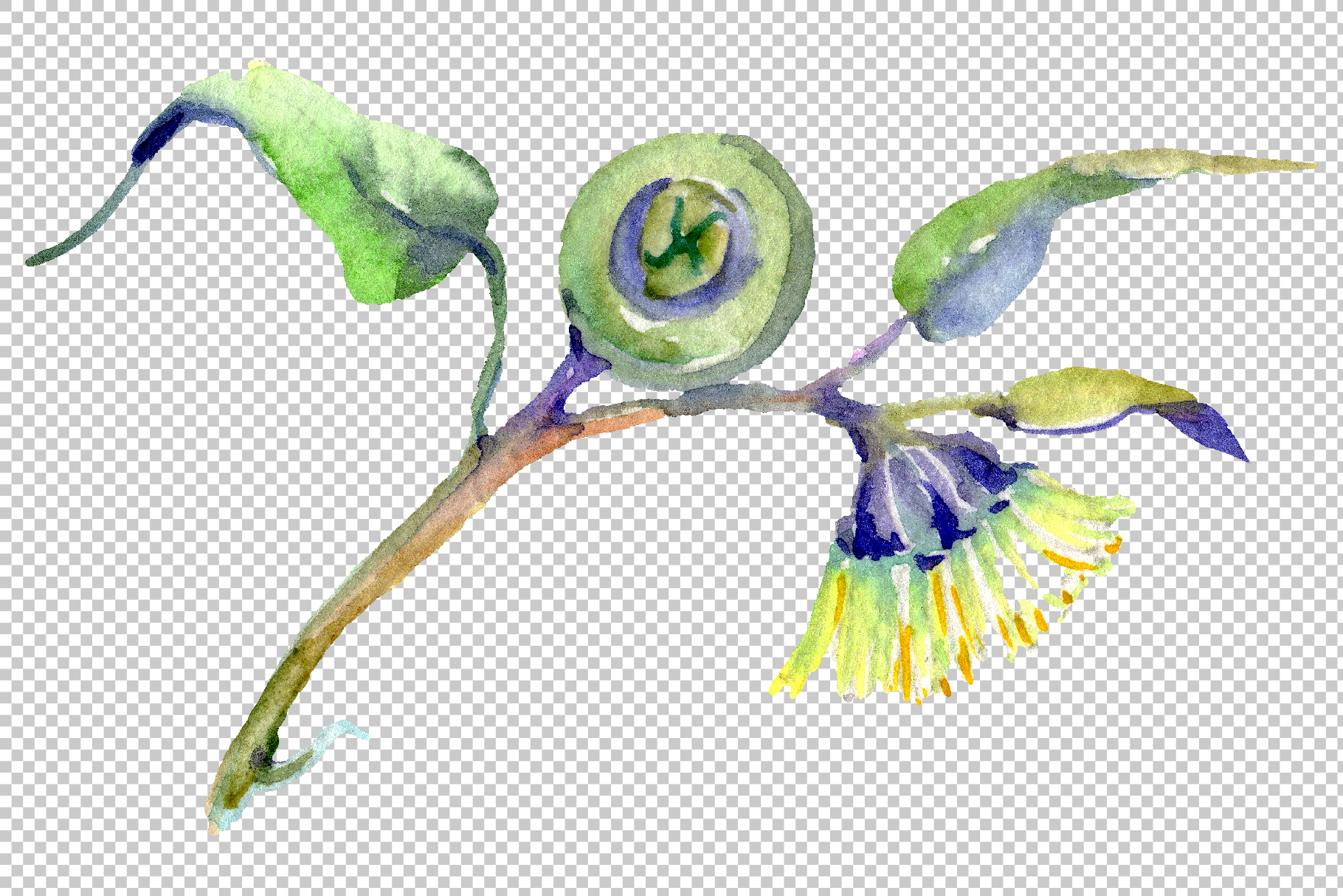 Eucalyptus Watercolor png example image 9