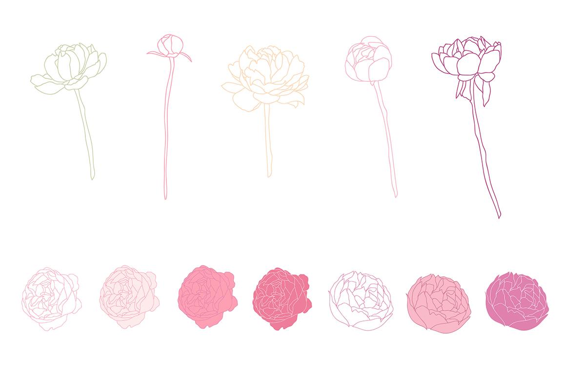 Flower Peonies example image 4