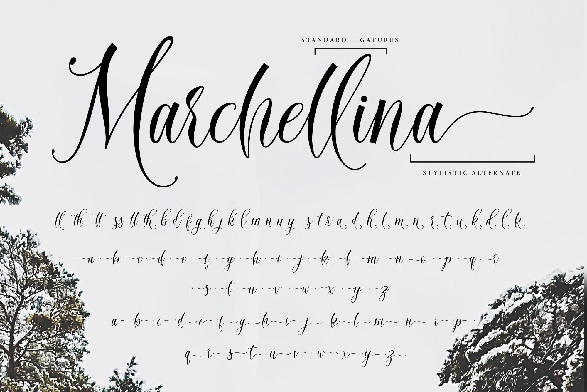 Mitchellia Script - Elegant Script example image 12