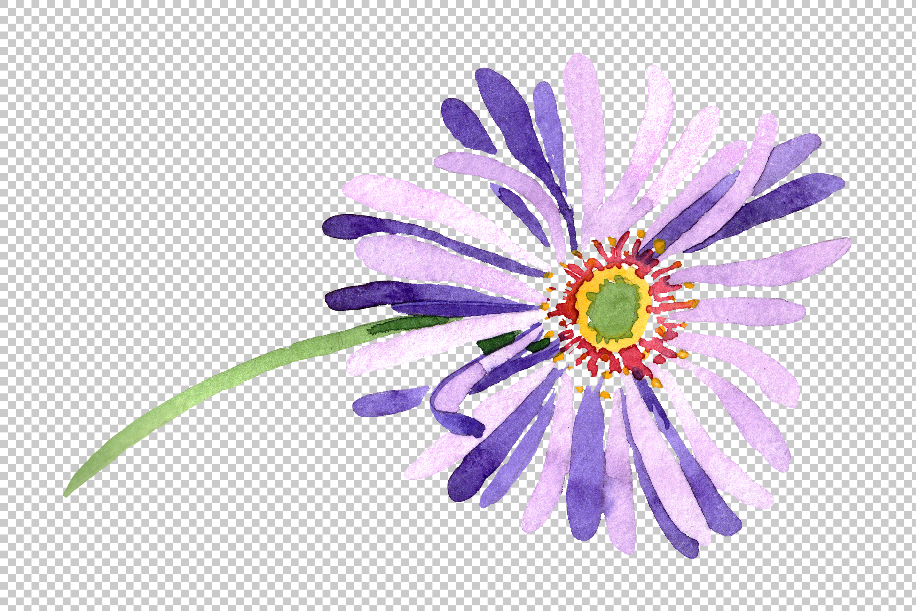 Asters Watercolor png example image 10
