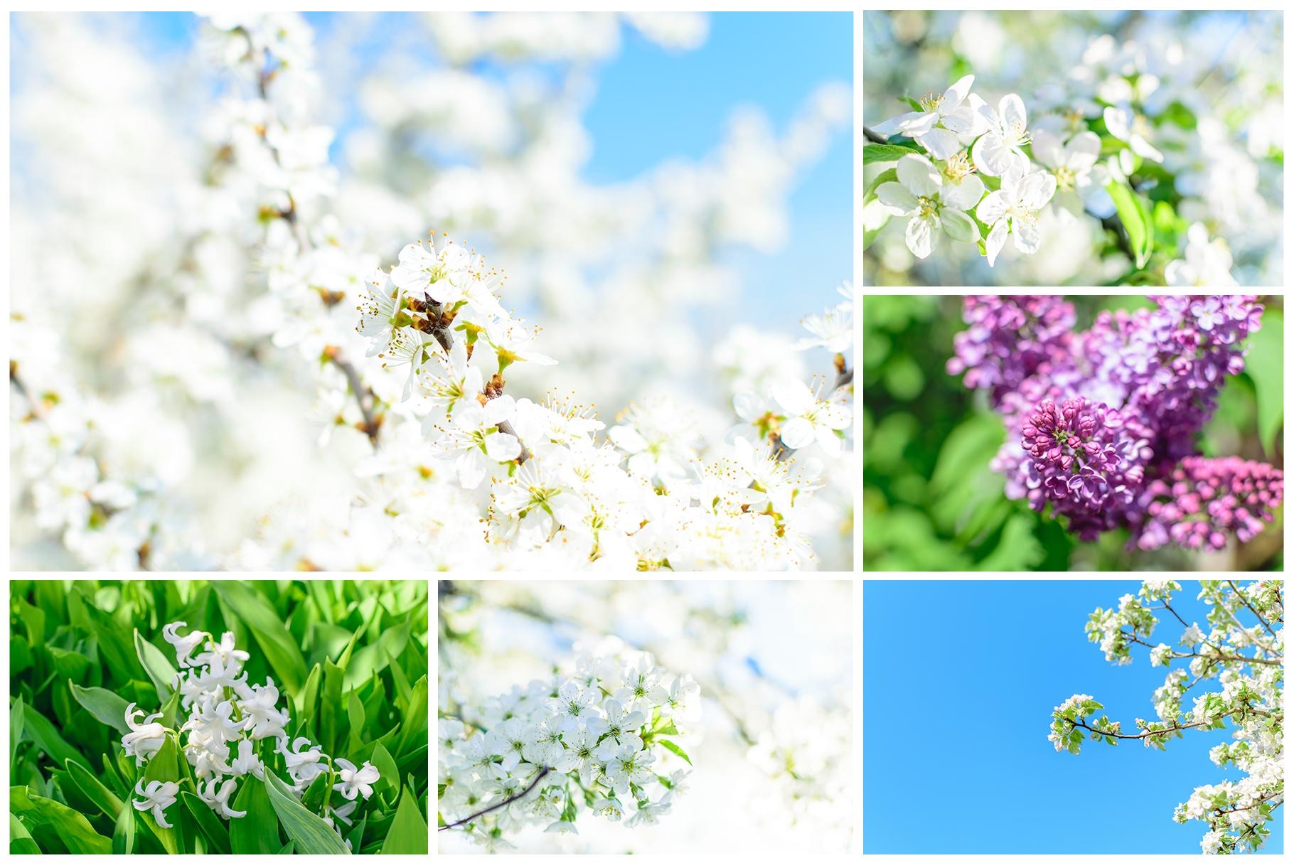 Spring Flowers and Paintings Bundle example image 16