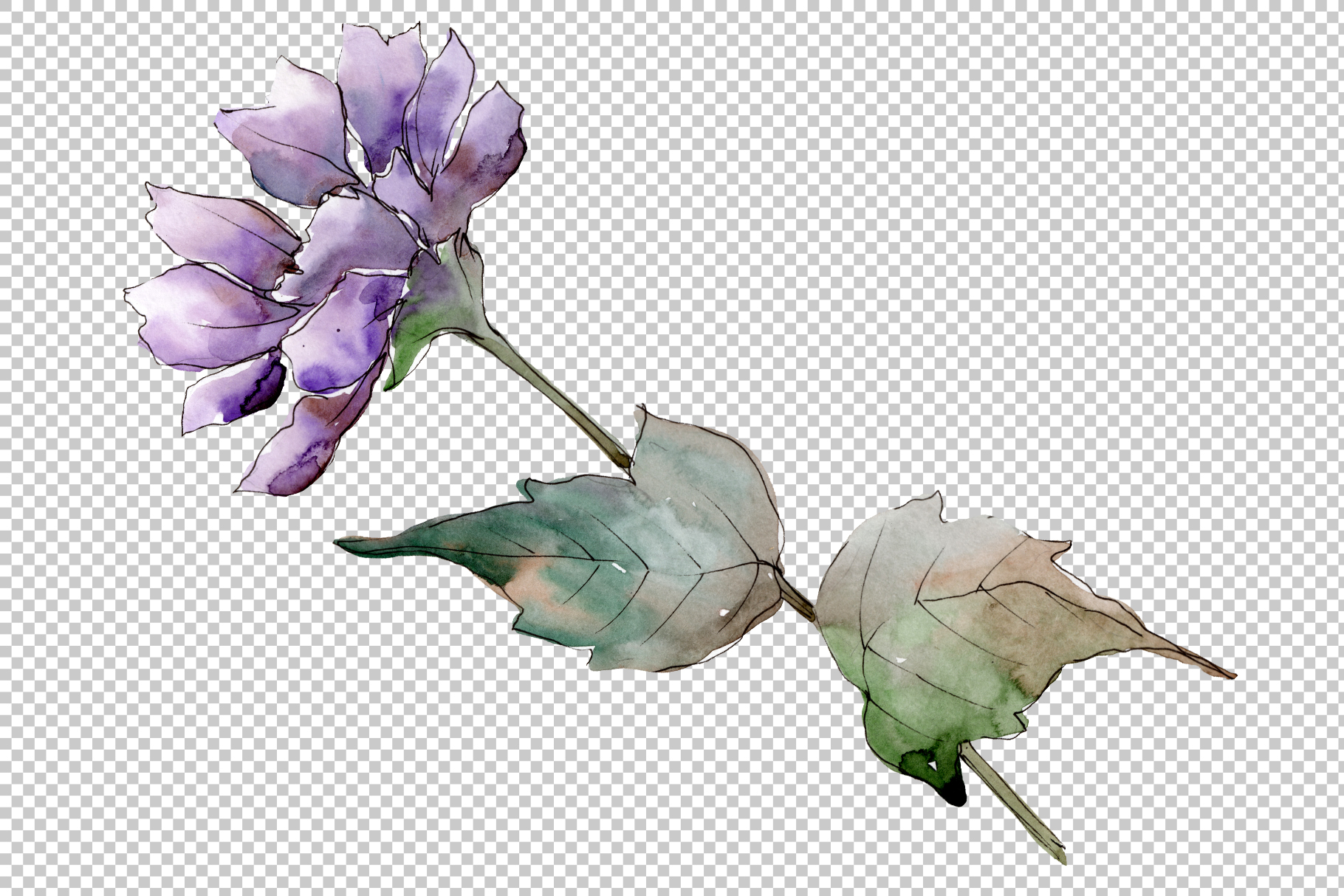 Delicate flower daisy watercolor png example image 2