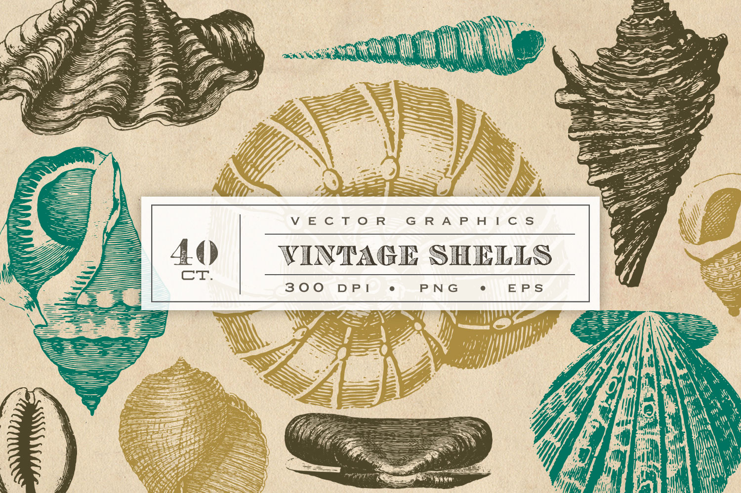 Vintage Shell Vector Graphics example image 1