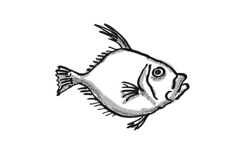 Silver Dory New Zealand Fish Cartoon Retro Drawing example image 1