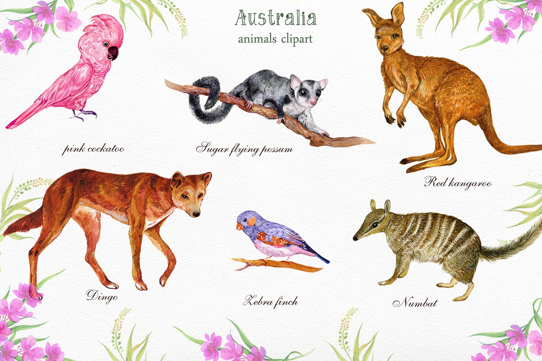 Animals Australia Watercolor example image 2
