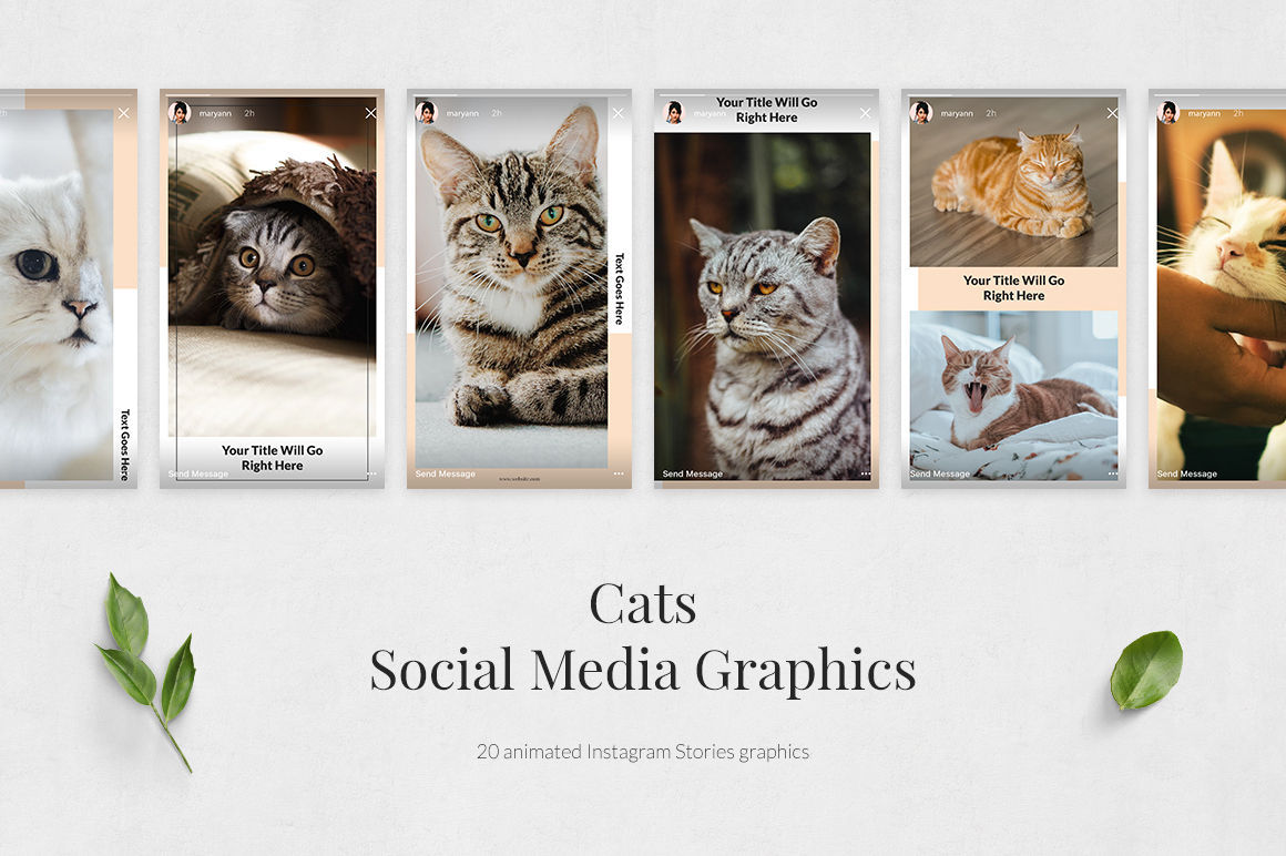 Cats Animated Instagram Stories example image 2