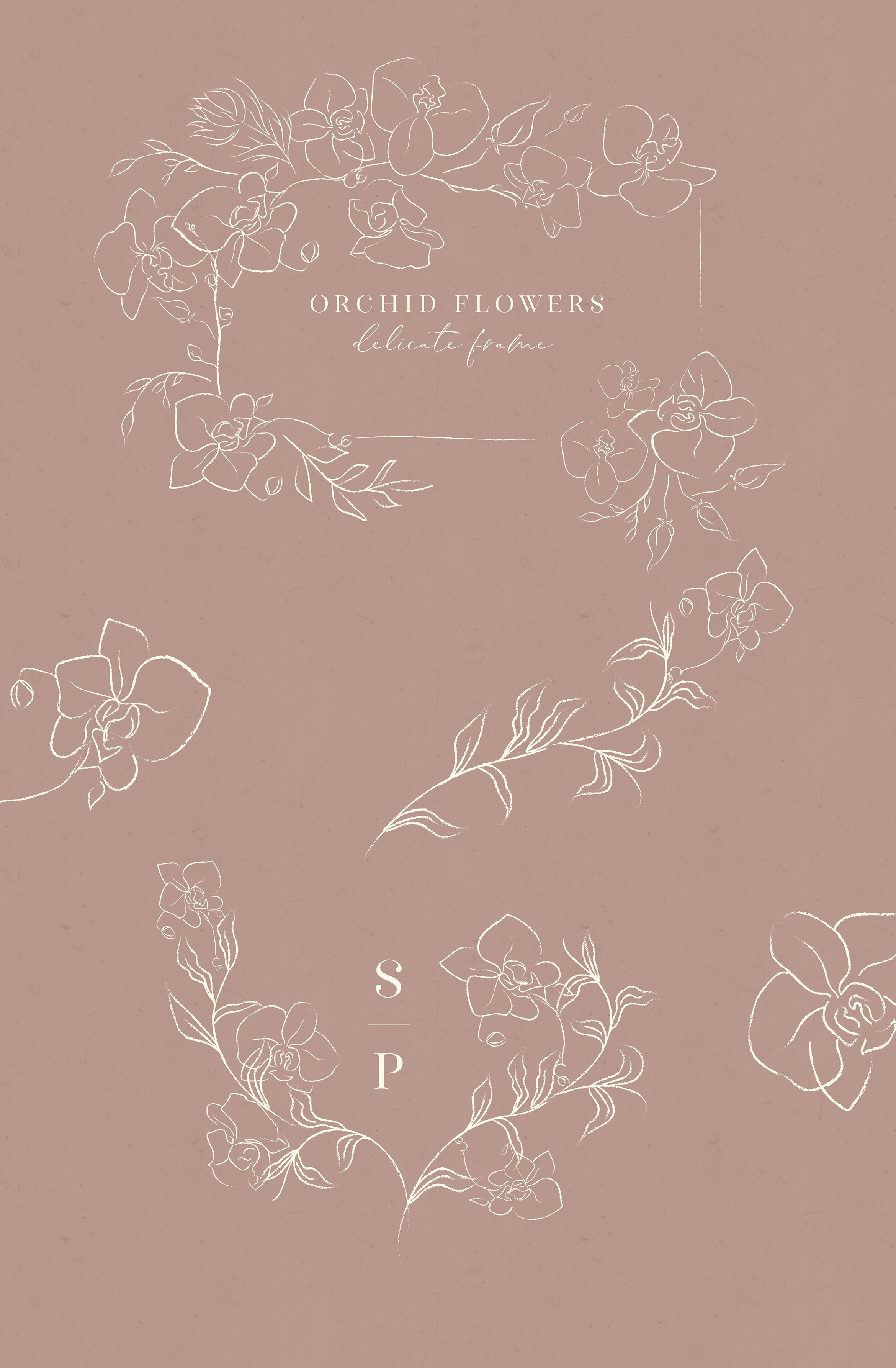 Line clipart hand drawn fine art graphic orchid flower example image 5