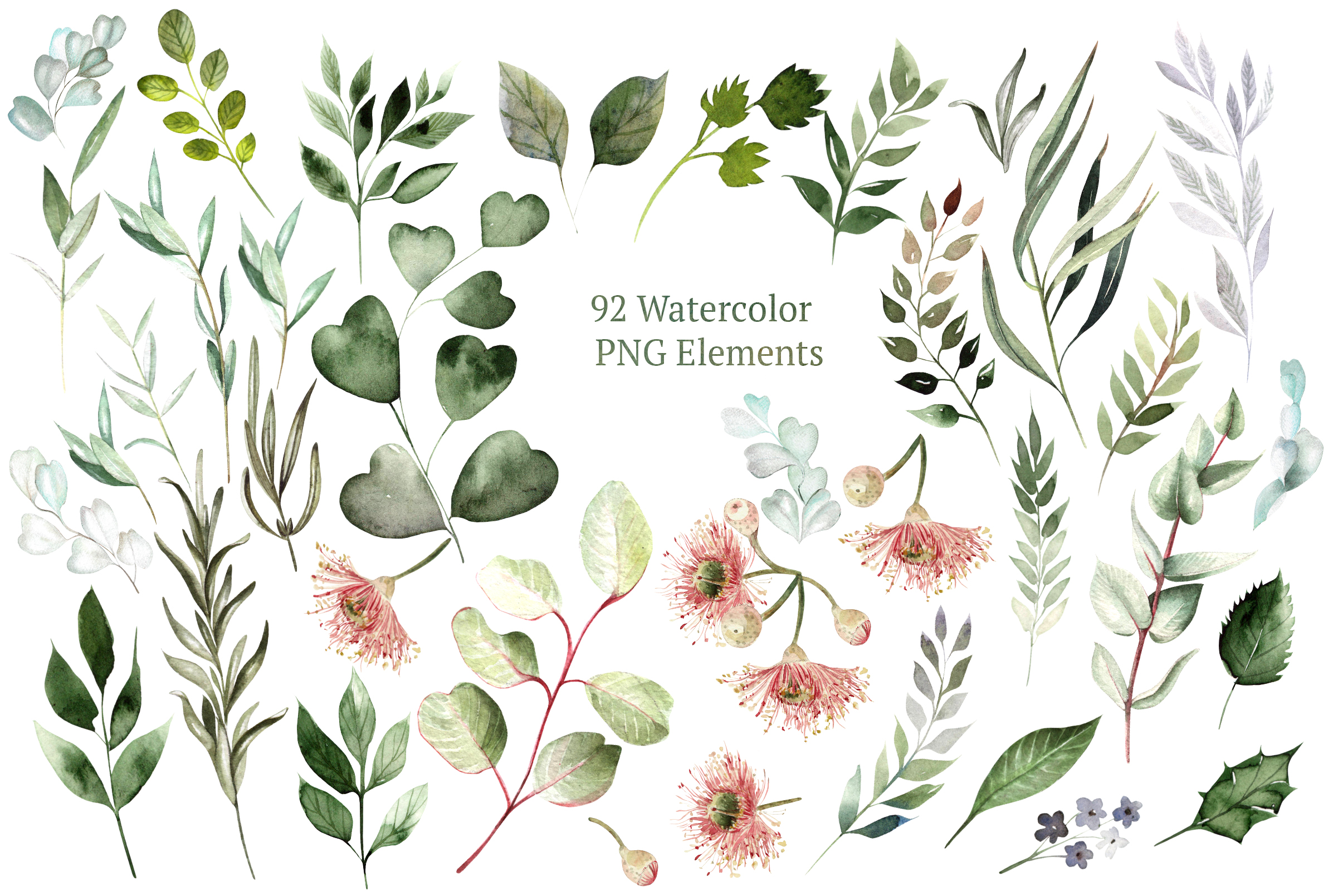 Eucalyptus & LEAVES watercolor example image 6