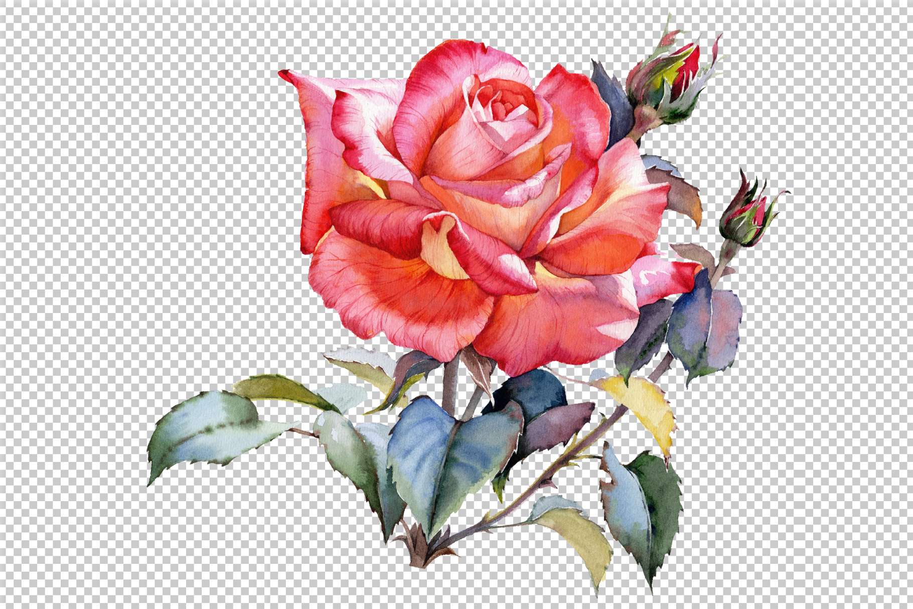 Red Rose Realistic Png Watercolor Set