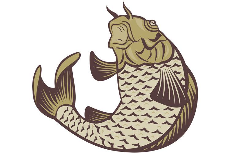 Koi carp jumping up example image 1