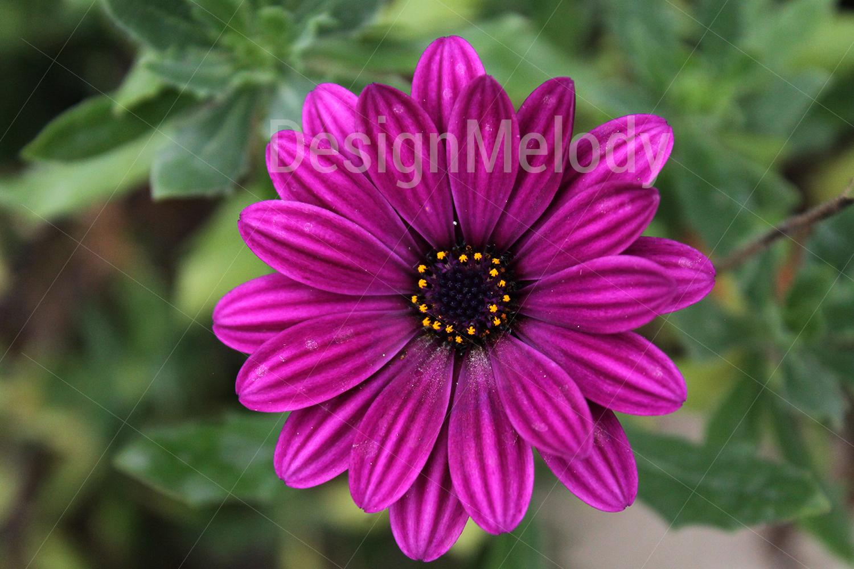 Vibrant Flowers example image 1