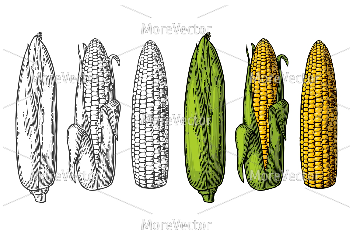Set ripe cob of corn from the closed to the cleaned example image 1