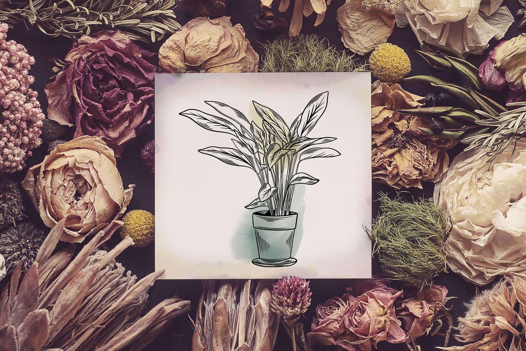 Indoor Plants example image 4