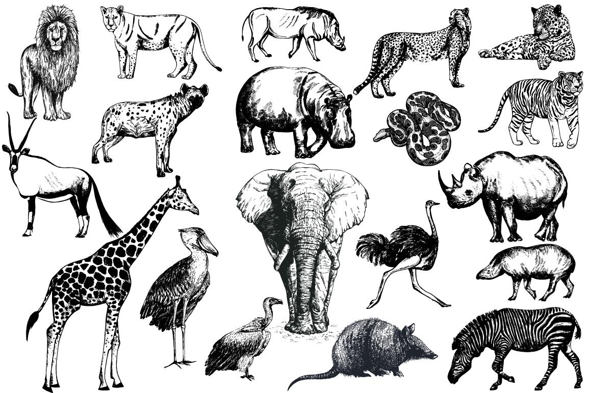 Wild Animals 3 example image 1