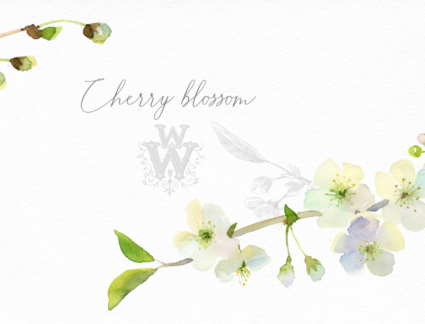 Watercolor white cherry blossom spring clipart example image 6