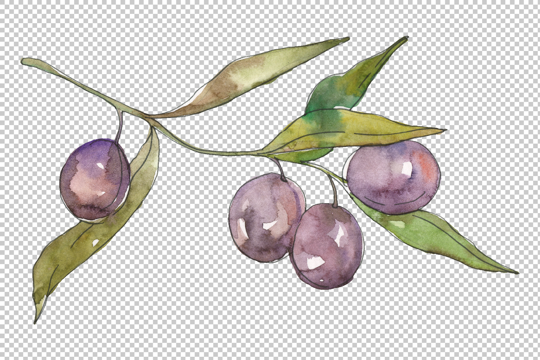 Olives 2 Watercolor png example image 4