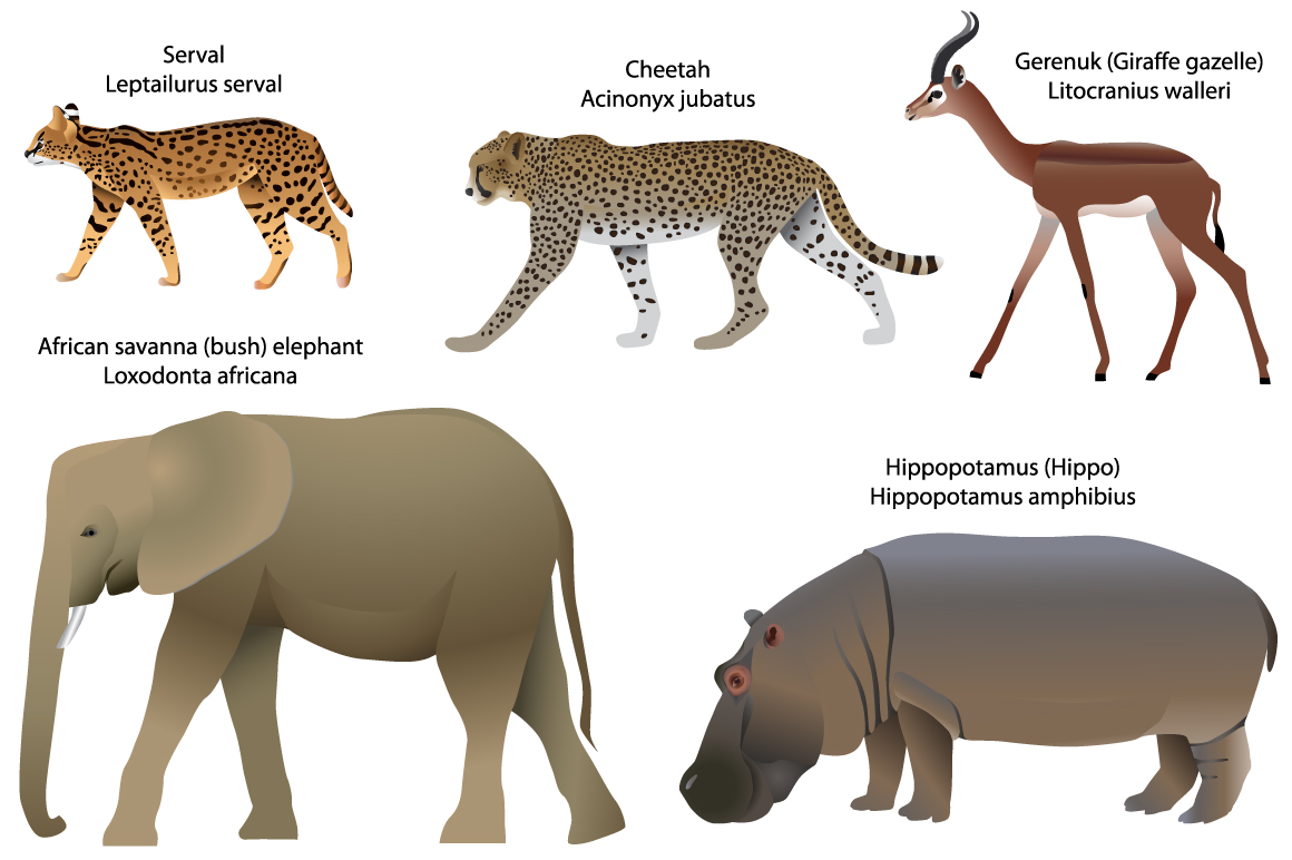Animals of Africa: serval, cheetah, gerenuk, hippo, elephant example image 1