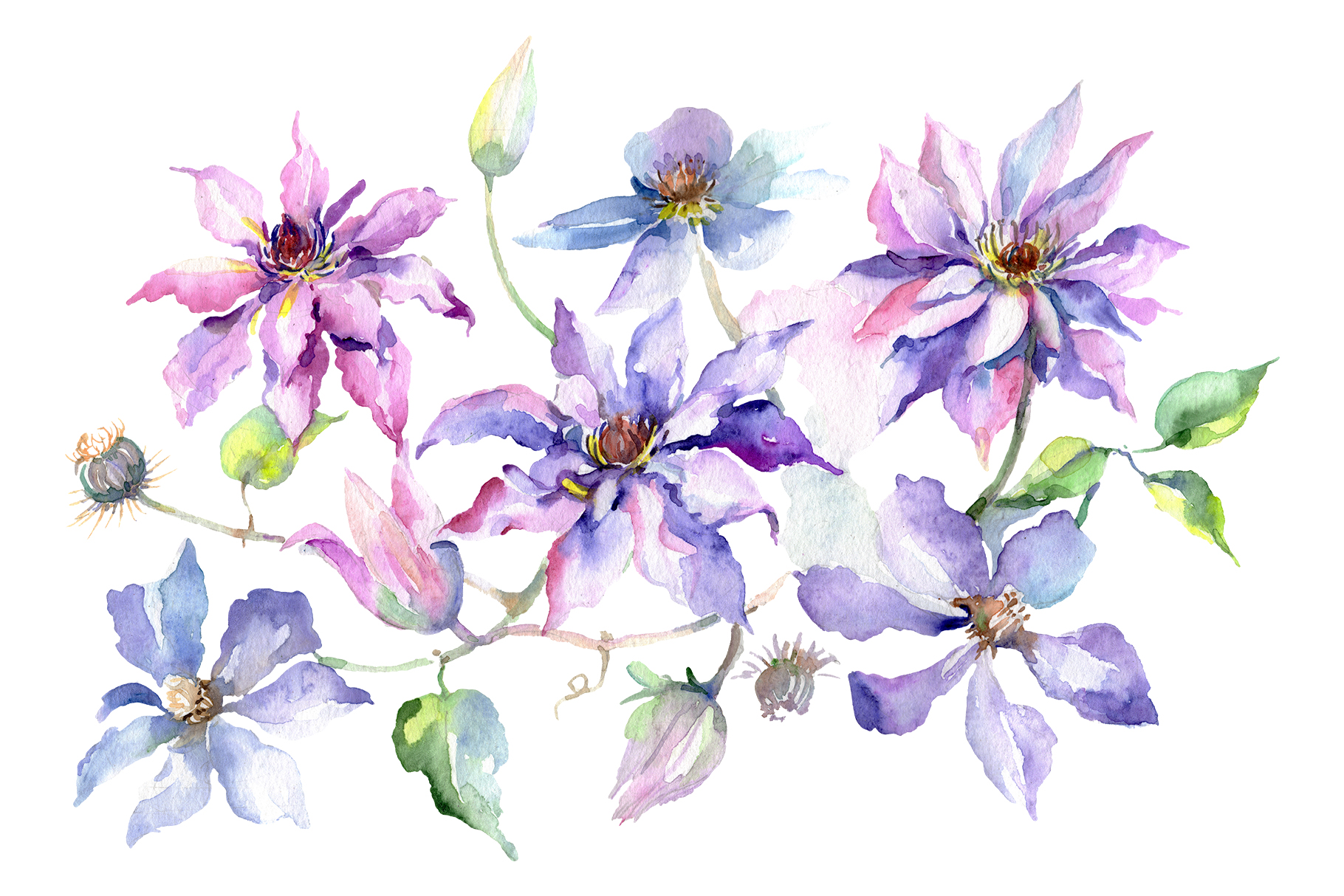 Branch of gentle purple flowers Watercolor png example image 1