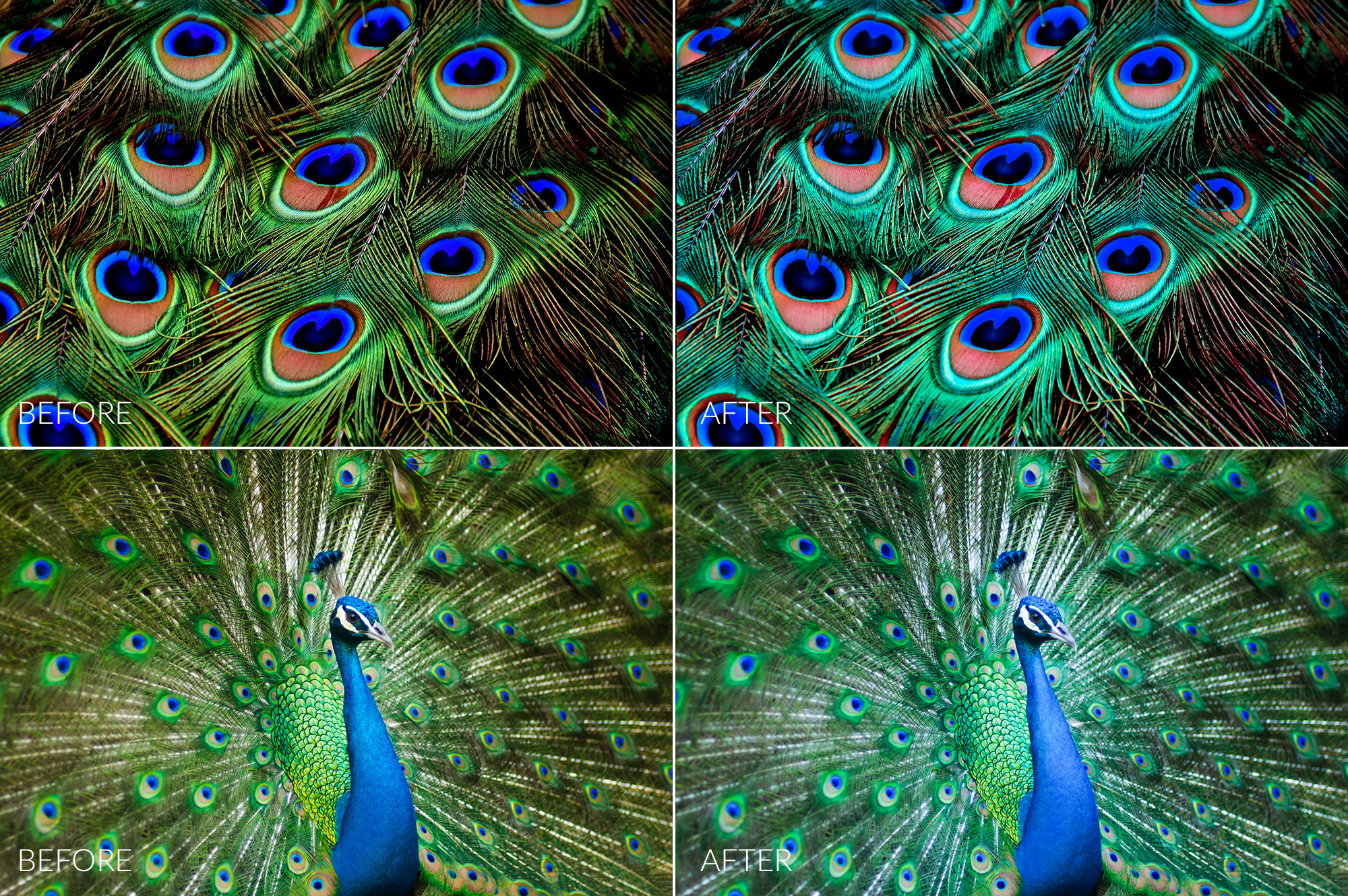Peacock Lr Presets example image 5