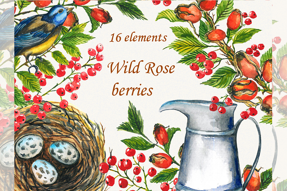 Wild rose clipart, Watercolor Wild rose clipart, rosehip example image 4