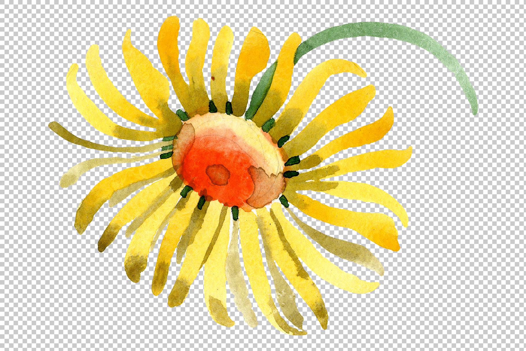 Yellow chamomile Watercolor png example image 5