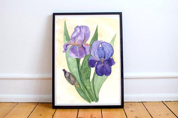 Watercolor Irises Clip Art + Print example image 5