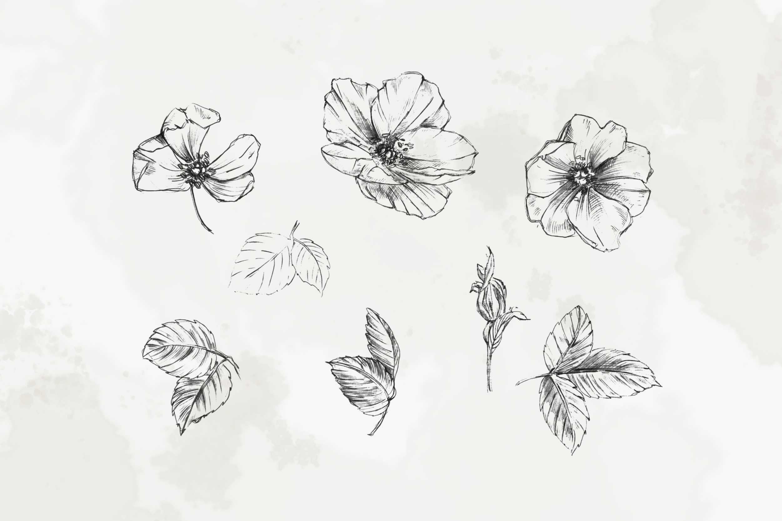 Hand Drawn Fine Art Graphic Images - Delicate wild rose. example image 3