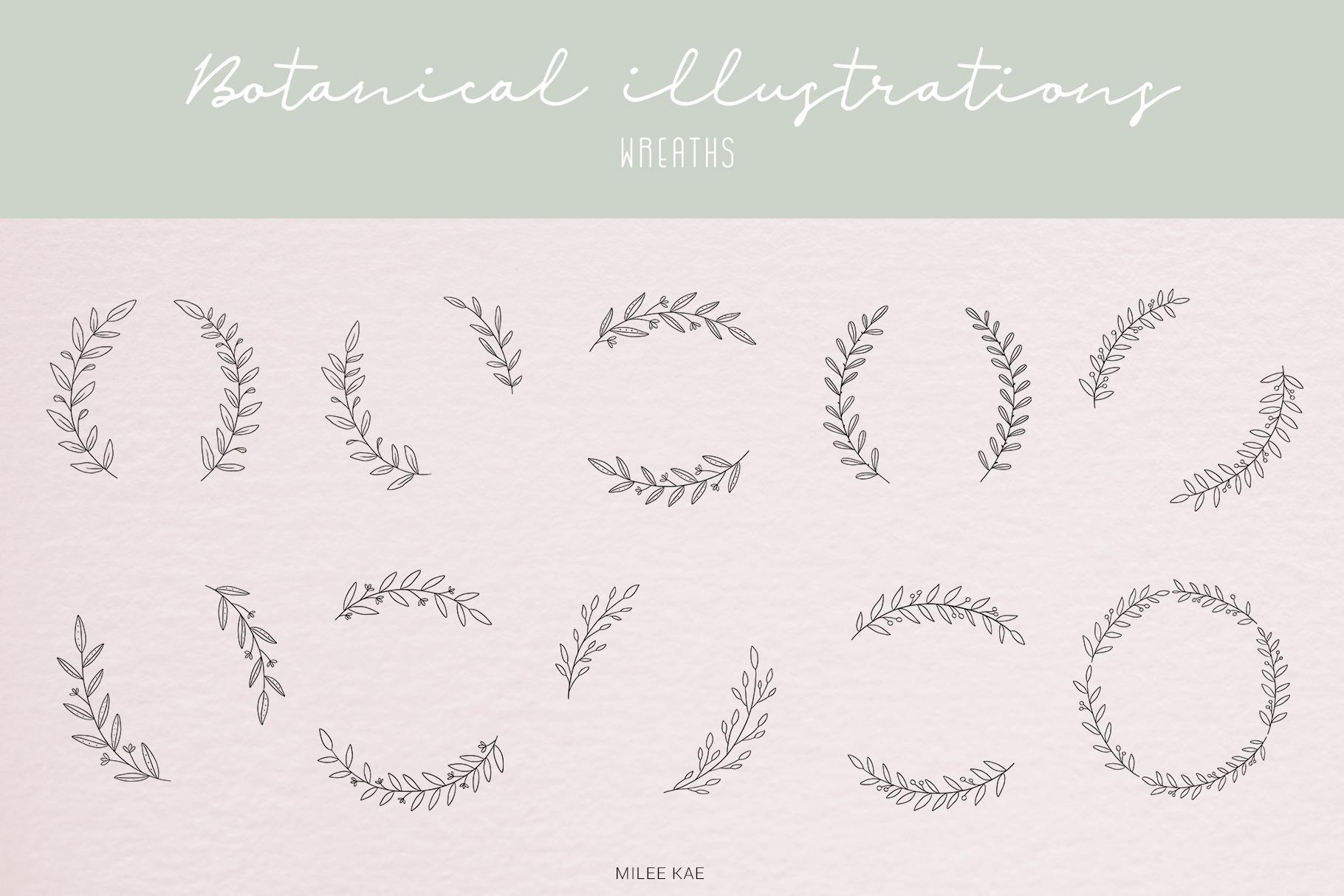 40 Modern Botanical Illustrations example image 6
